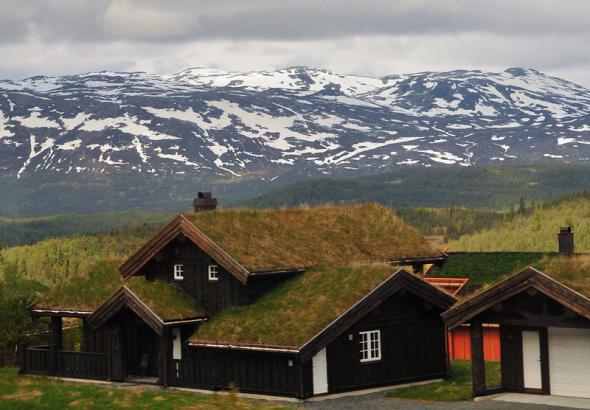 Природная крыша дома. Фото