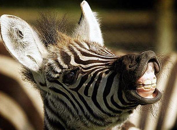 Зоологи объяснили, зачем зебрам полосы. Фото