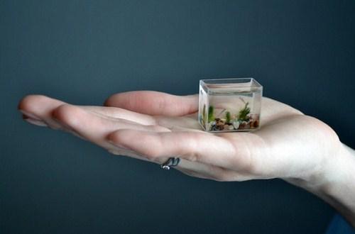 Ну очень маленький аквариум. Фото